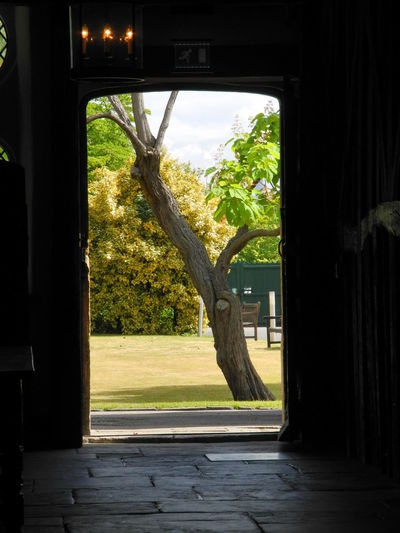 View of a tree through a doorway in an Elizabethan house Architecture Beauty In Nature Branch Day Doorways Elizabethan Growth Indoors  Nature No People Sky Tree Under Window