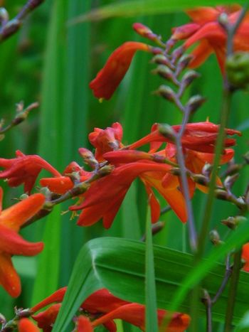 Red Plant Close-up Nature Day Beauty In Nature Outdoors Flowers Garden Fleurs Flowers, Nature And Beauty