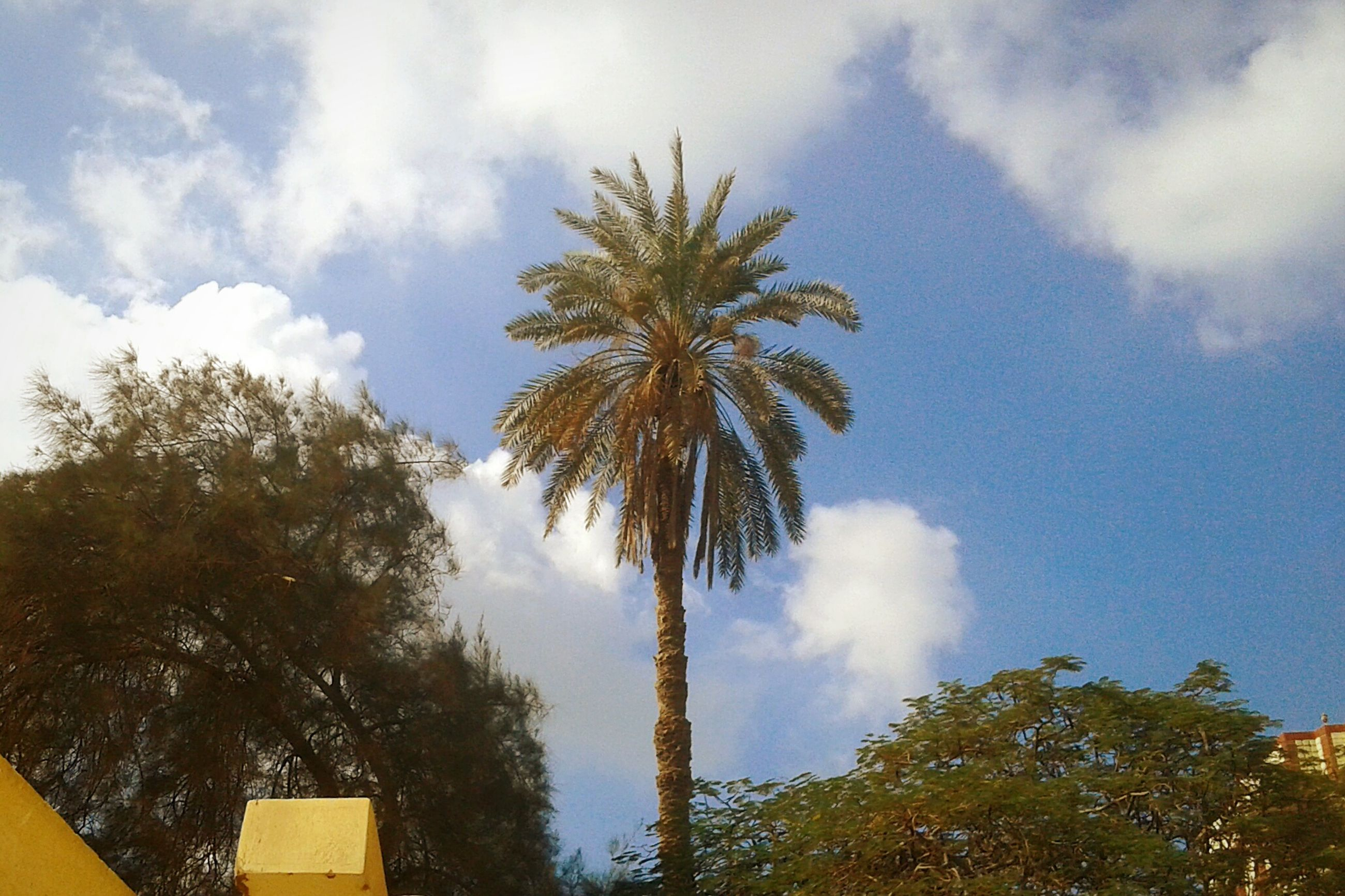 tree, low angle view, palm tree, sky, cloud - sky, no people, growth, nature, outdoors, beauty in nature, day
