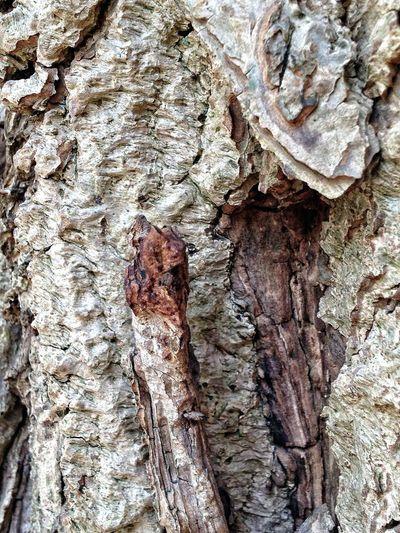 Trees Old Tree Treetastic Beautiful Bark
