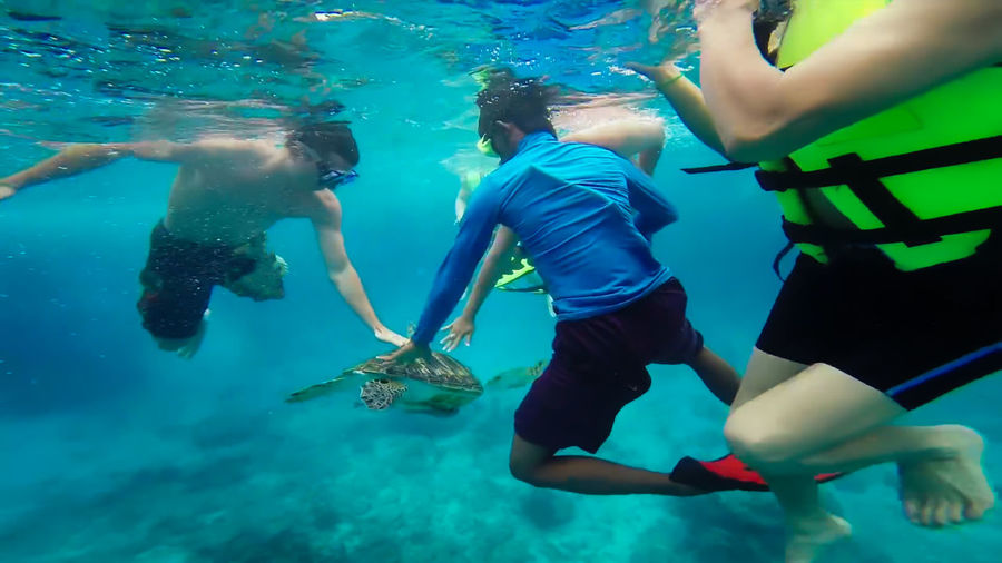 People touching turtle while swimming undersea