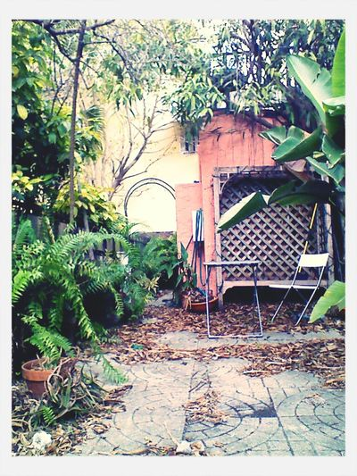 Back In The Jungle That Is The Patio #Miami #Beach #Life