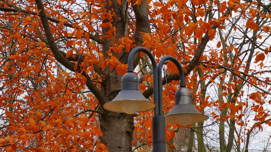 Tree Outdoors Leaf No People Low Angle View Beauty In NatureBerlin Multi Colored Lamp Design Autumn🍁🍁🍁 die letzten Herbstblätter