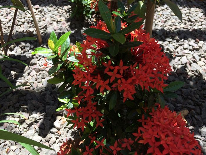 Close-up of red flowers growing on plant