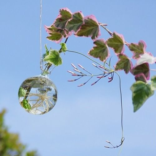 葉 葉っぱ 花 ハゴロモジャスミン 蔓 光 根っこ 瓶 水 アイビー