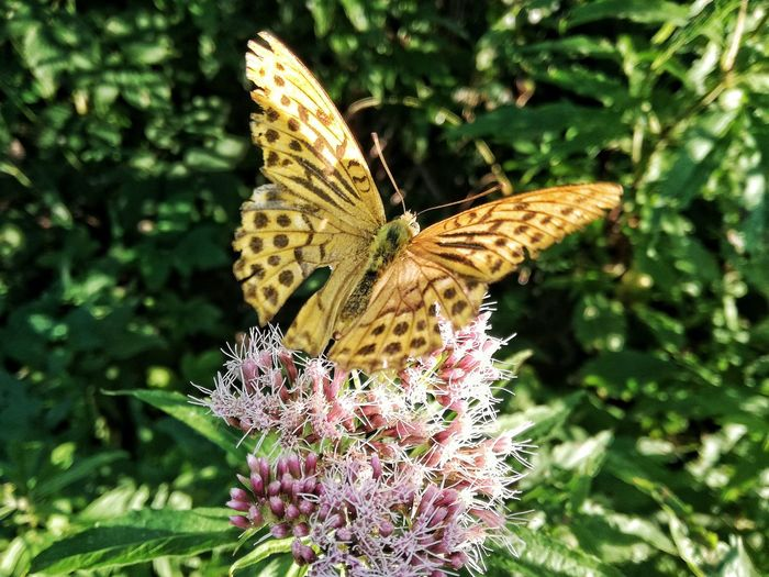 One Animal Animals In The Wild Animal Themes Wildlife Insect Butterfly - Insect Flower Butterfly Plant Beauty In Nature Nature Close-up Growth Outdoors Animal Wing Day Animal Markings No People Beauty In Nature WoodLand Nature