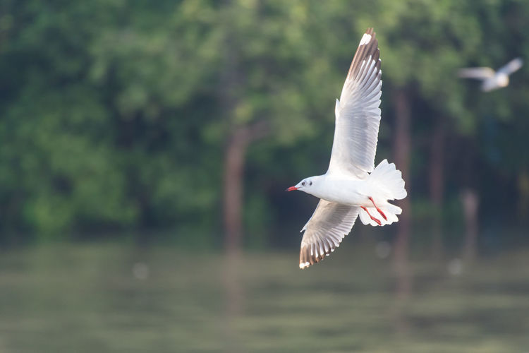 Bird flying over lake against trees in forest