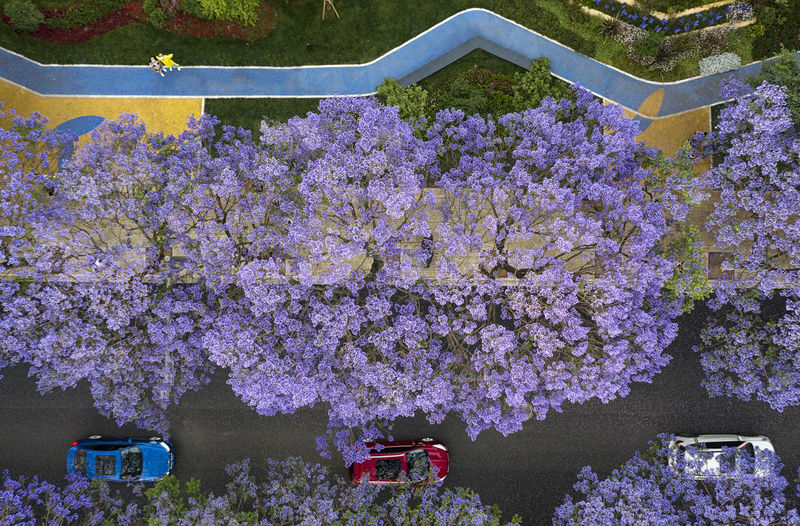 High angle view of pink flowering plants in park