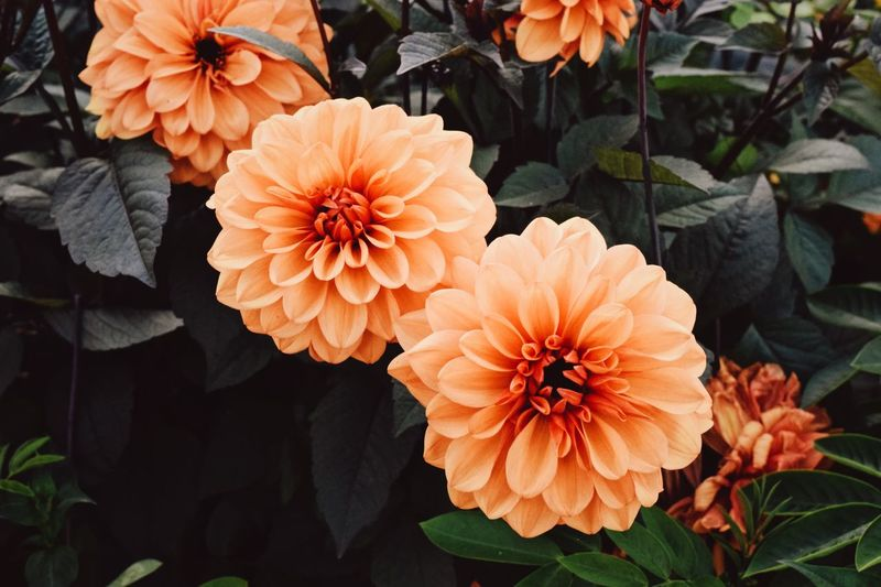 Plant Flowering Plant Growth Flower Flower Head Beauty In Nature Petal Inflorescence Fragility Freshness Close-up Nature Plant Part Leaf No People Orange Color Outdoors