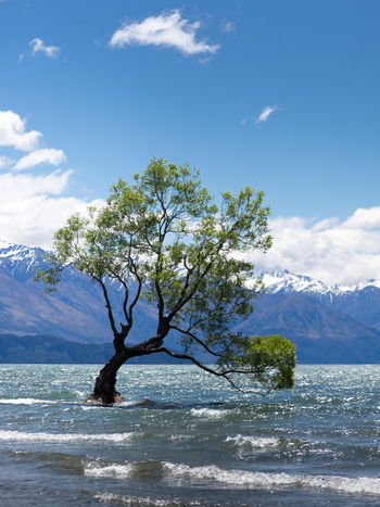Nature New Zealand Beauty New Zealand Landscape Wanaka Beauty In Nature Branch Cloud - Sky Day Lake Landscape Mountain Nature New Zealand No People Outdoors Roadtrip Scenery Scenics Sea Sky Tranquil Scene Tranquility Tree Wanaka Tree Wanakalake