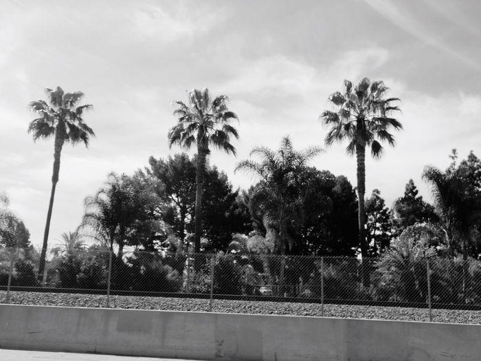 🌴🌴🌴🌴🌴 Palm