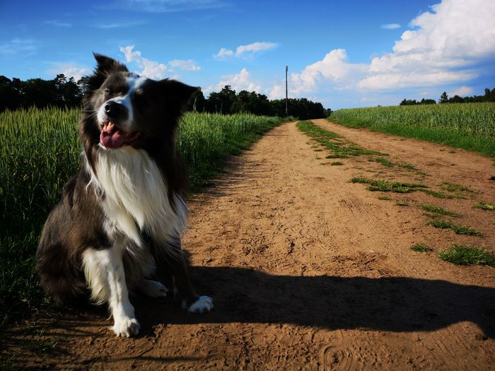 Portrait of dog relaxing on dirt road