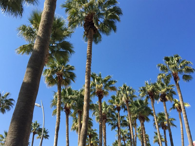 a look at tall palm trees iin Marmaris, Turkey Beautiful Blog Day Green Holiday Marmaris Nature Nature Nature_collection No People Palm Palm Tree Palm Tree Palms Sky Spring Tourism Tourist Travel Travel Blog Travel Destinations Tree Tree Turkey Vacation