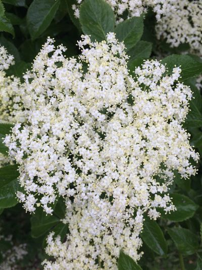 Flower Fragility Blossom White Color Nature Growth Apple Blossom Freshness Beauty In Nature Botany No People Day Close-up Springtime Outdoors Tree Plant Branch Blooming Flower Head