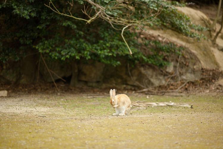 Cat standing in a field