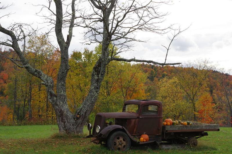 Autumn glory Tree Branch Fall BeautyfallTransportation Autumn Is Here...Fall Mood! Old Truck Pumpkin Season Autumn Rural Scene Fieldscape First Eyeem Photo