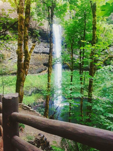 Landscape_Collection Summer Fun Waterfalls And Calming Views  View Between Trees Waterfall #water #landscape #nature #beautiful Greenery Nature Is Beautiful Nature Waterfall_collection Summertime Waterfall-collection Green Nature Flowing Water Silver Falls State Park Oregon Hiking Trail Is Beautiful Landscape_photography Nature_perfection Scenery Shots Trees Green Green Green!  Flowingwater Waterfalls💦 Waterfalls