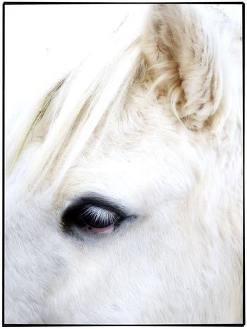 Snow horse Horse Horses snow