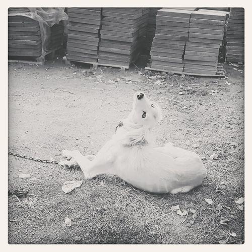 Мой пес-балерина пес собака собакаулыбака лол First Eyeem Photo