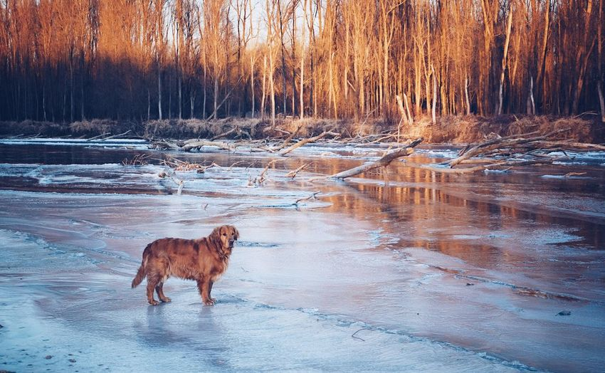 Domestic Animals Animal Themes One Animal Water Mammal Dog Outdoors Pets Nature No People Lake Cold Temperature Day Snow Fujifilm_xseries Vscocam