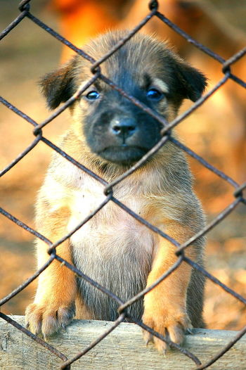 Animal Themes Cage Chainlink Fence Close-up Day Dog Dog Feeling Dog In Cage Domestic Animals Fence Looking At Camera Mammal Metal Nature No People One Animal Outdoors Pets Portrait Protection Sadness Dog Security Bar Sky