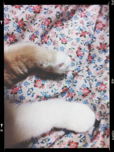 Cat Paws ❤️