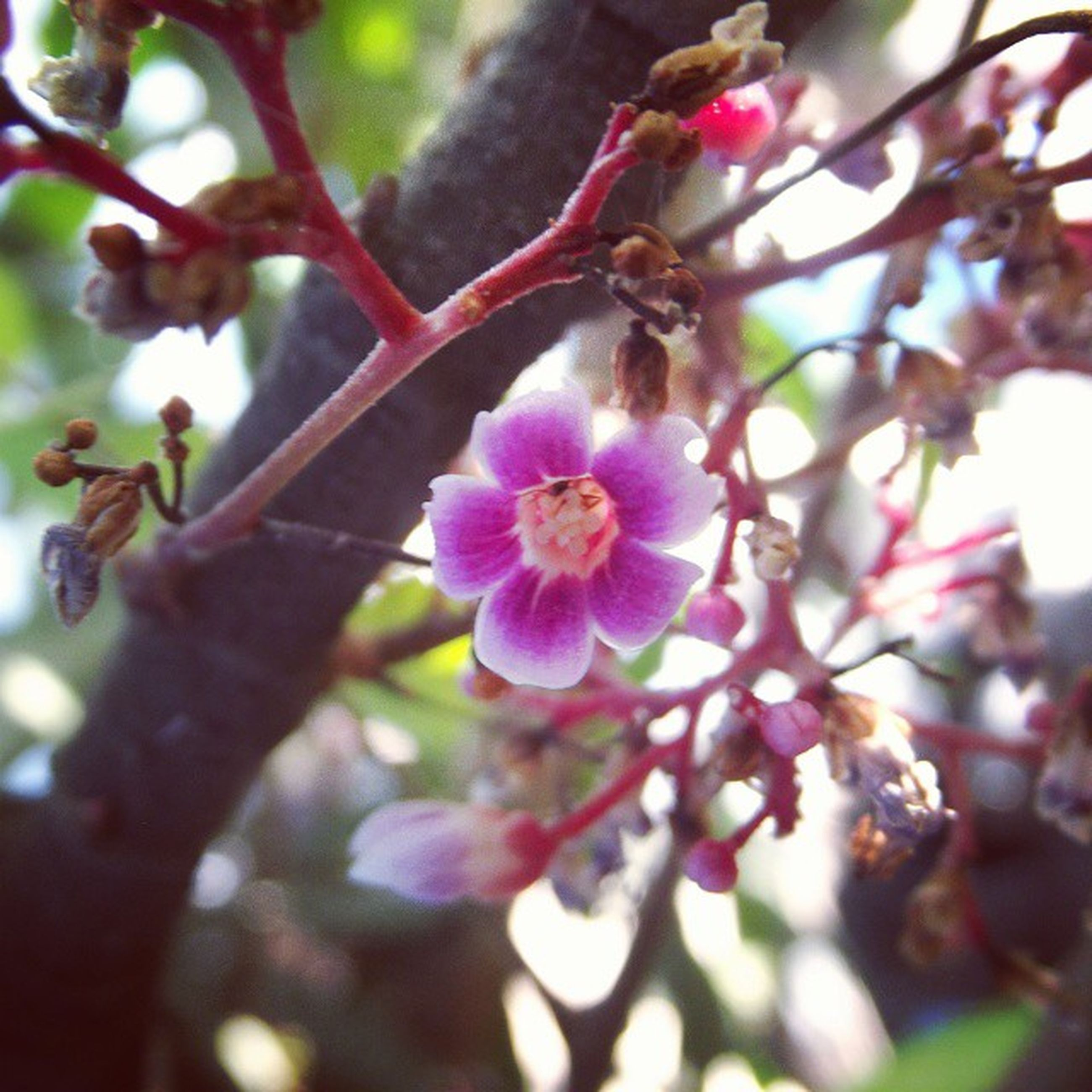 flower, freshness, branch, growth, fragility, tree, beauty in nature, focus on foreground, nature, close-up, petal, blossom, cherry blossom, low angle view, in bloom, springtime, blooming, twig, selective focus, cherry tree
