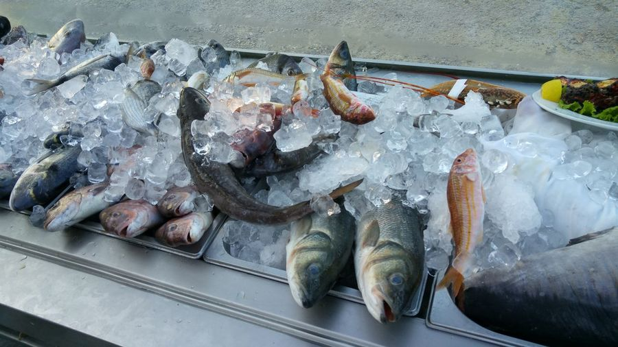 High angle view of fish in crushed ice
