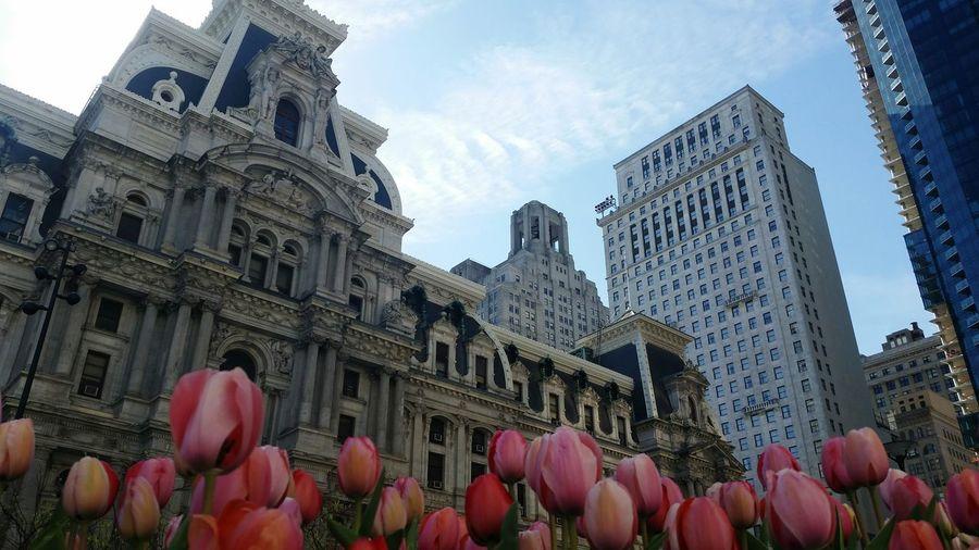 City Flower Sky