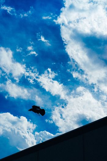 Raven. EyeEm Best Shots EyeEmNewHere Cloud - Sky Sky Low Angle View Blue Nature Silhouette Day No People Flying Outdoors Built Structure Animal Themes Architecture Animal Mid-air Beauty In Nature Animals In The Wild