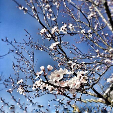 Bahar mı o