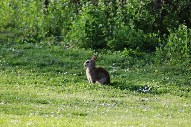 Side view of a rabbit on field