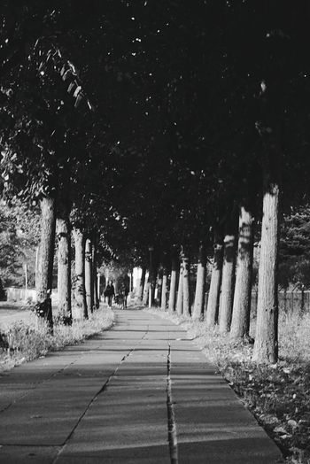 Alley Tree Night Outdoors The Way Forward No People Nature Tree Trunk Road Star - Space Sky Astronomy Streetphotography Streetphoto_bw City Blackandwhite Walking Black And White Street Photography Blackandwhite Photography Silhouette Black & White