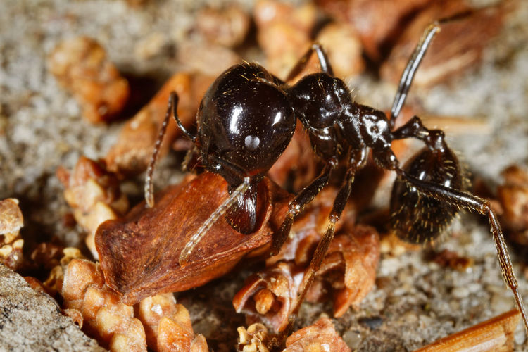 Close-up of ant