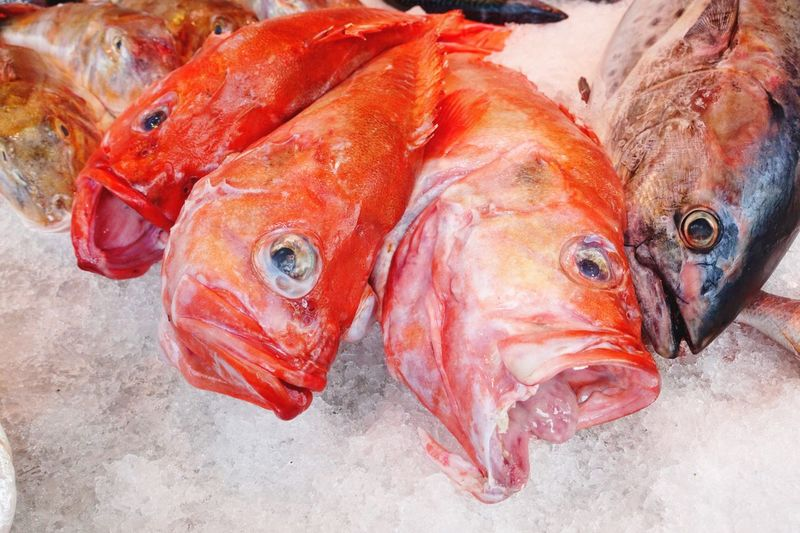 Close-up of dead fishes on crushed ice for sale in market
