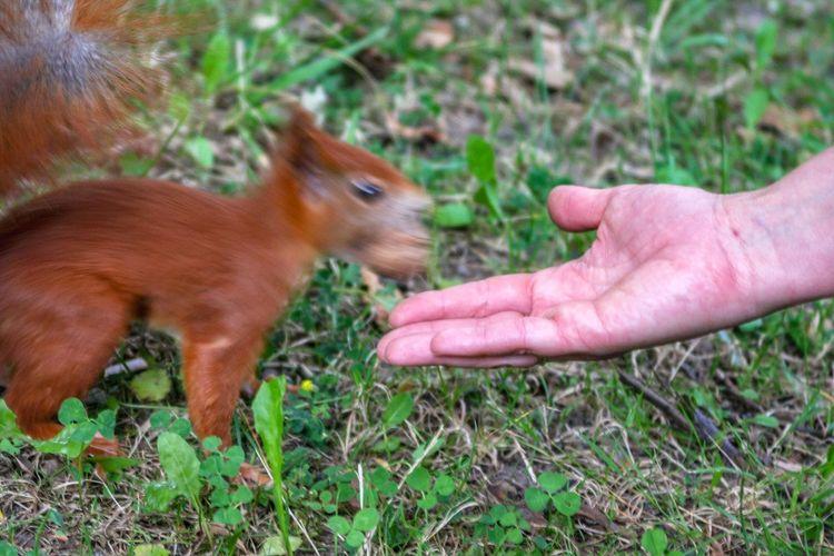Human Hand Pets