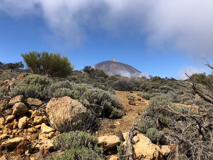Volcano Teide, Tenerife 🇪🇸 Volcano Teide SPAIN Teide National Park Tenerife Nofilter Sky Cloud - Sky Tree Plant Nature No People Day Beauty In Nature Growth Tranquility Tranquil Scene Outdoors Sunlight Landscape Low Angle View Abundance Scenics - Nature