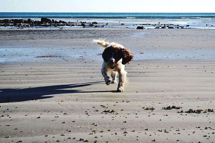 Pet Photography  Cornwall Walks Adventure Buddies Lovelovelove Happy :)