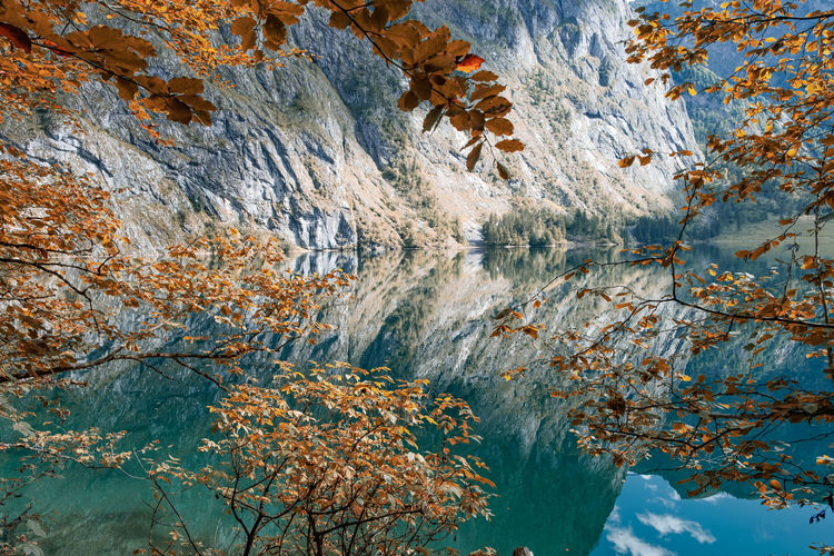Low angle view of autumn trees and rocks
