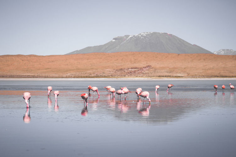 Animal Animal Themes Animal Wildlife Animals In The Wild Beauty In Nature Bird Day Flamingo Flock Of Birds Group Of Animals Lake Land Landscape Large Group Of Animals Mountain Nature No People Outdoor Photography Outdoors Pink Color Reflection Scenics - Nature Sky Vertebrate Water