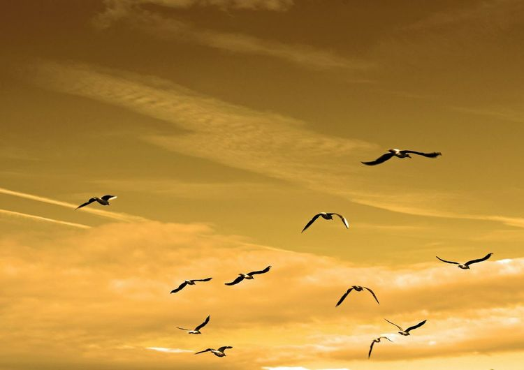Aire Oiseaux