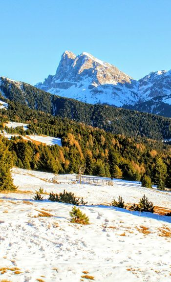 Mountain Snow Cold Temperature Winter Snowcapped Mountain Tree Mountain Peak Pinaceae Lake Clear Sky