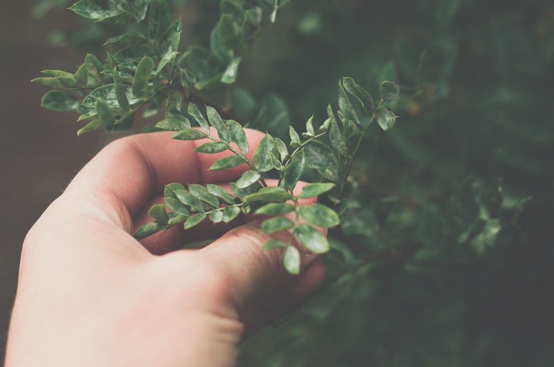 Cropped of hand holding plant