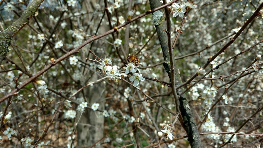 Close-up of white flowering plant in winter