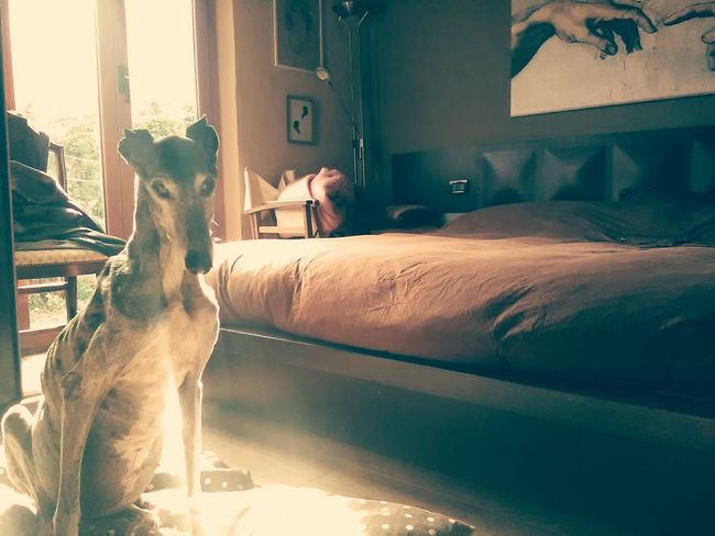EyeEm Selects One Animal Domestic Animals Indoors  Animal Themes Nature Close-up Fragility Naturelovers No People