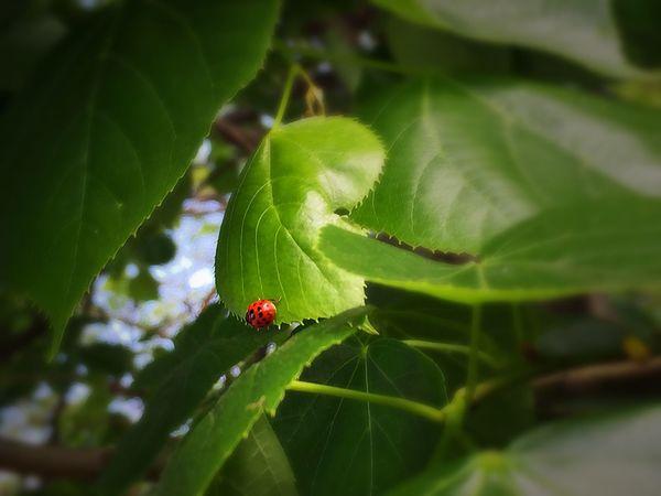 Spring Red&green Ladybug Luck