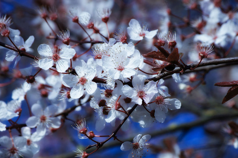 EyeEm Best Shots EyeEm Nature Lover EyeEmBestPics EyeEm Best Shots - Nature Beauty In Nature Wonders Of Nature Tree Flower Flower Head Branch Springtime Blossom White Color Sky Close-up In Bloom Stamen Pistil Pollen Blooming