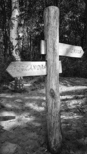 sign Tree Sign Grass Sand Wooden Close-up Arrow Sign