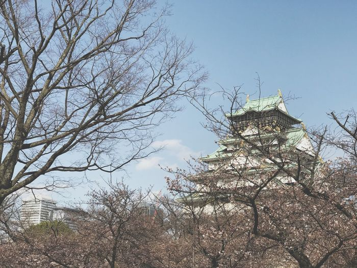 osaka castle Japanese Castle Castle Tree Plant Sky Low Angle View Nature Branch Growth Outdoors No People Architecture Building Exterior Sunlight Cloud - Sky Beauty In Nature Day