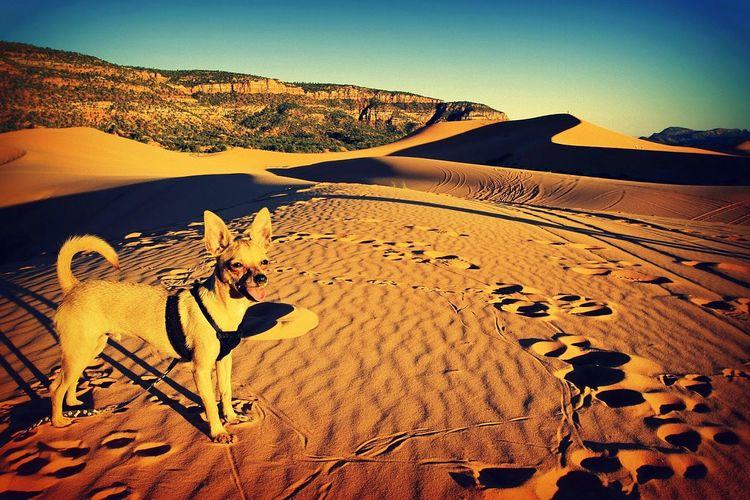 View of desert landscape